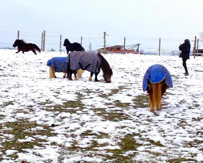 Ponies im ersten Schnee